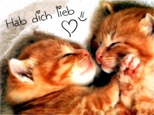 """""""sviđaš mi se na nemačkom se kaže ich hab dich lieb"""""""