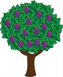 """genitiv- stablo šljive"""