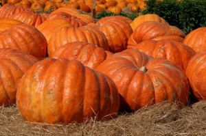 """američka bundeva, pumpkin"""
