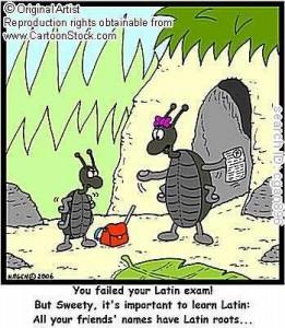 """prefiksi i sufiksi latinskog porekla"""