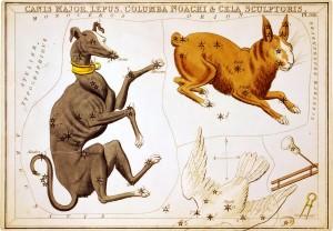 """""""sirijus, pseća zvezda"""""""