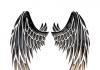krila okrilje izraz